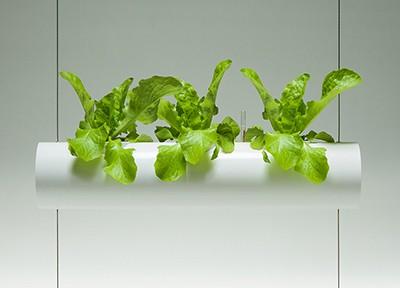 400x288-Salat