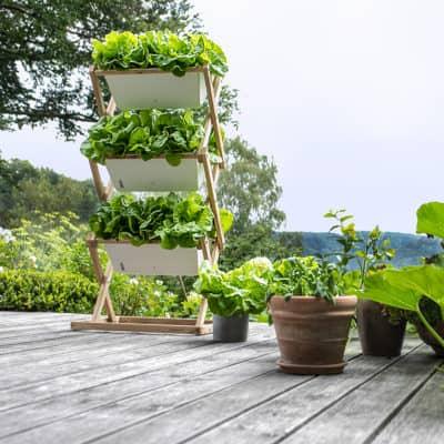 Blumenkasten auf Terrasse mit Blattsalat