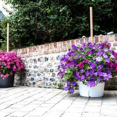Blumenkübel auf Terrasse