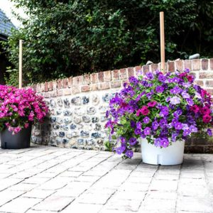 Blumentopf mit Pelargonien