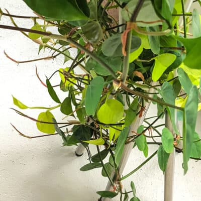 plant stand with hanging plant