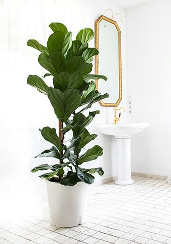 Blumenkübel weiß mit Zimmerpflanze