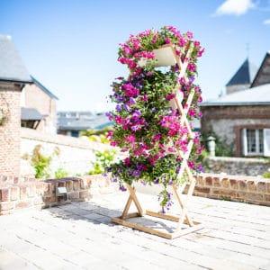 Geranien im Blumenständer