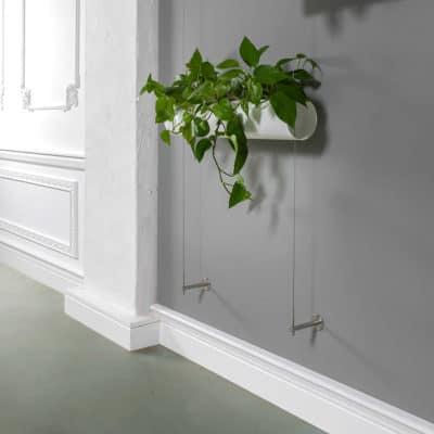 Hydropflanze Wandbefestigung