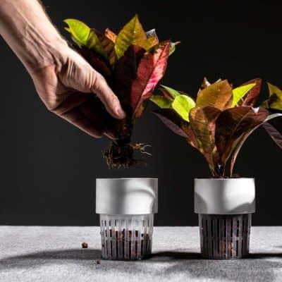 Hydropflanze Raumbegrünung