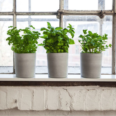 flower pots with herbs