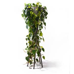 hochgarten with plants, plant stand