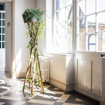 Pflanzenstaender mit Zimmerpflanzen