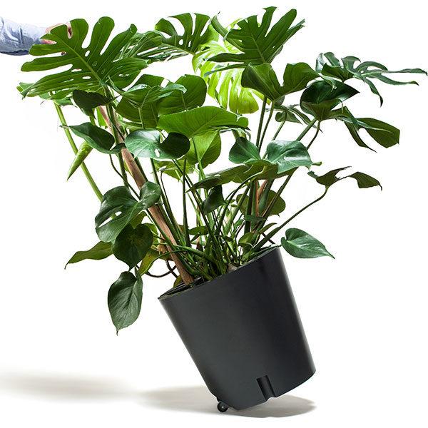 Plant Trolley
